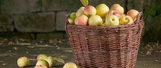 5 причин засушить яблоки, которые не сразу приходят в голову