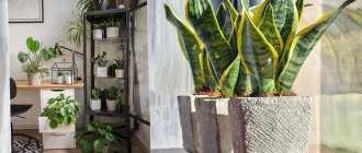 5 лучших цветущих комнатных растений для северных окон. Уход в домашних услових. Фото