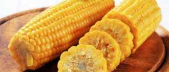 Как приготовить кукурузу в микроволновке: как сварить свежий продукт в початках без воды в домашних условиях и быстро, а также сколько минут следует держать?