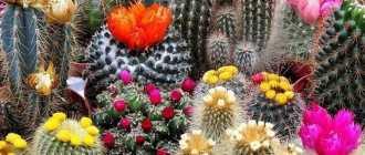 3 стратегии, которые заставят ваши кактусы цвести