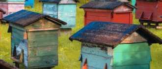 10 советов, как привлечь пчел на свой приусадебный участок, если вы не занимаетесь пчеловодством