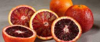 Гибрид красный апельсин: описание и характеристики цитруса
