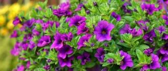 11 цветов, которые сажают на рассаду уже в январе: обзор с названиями и фото