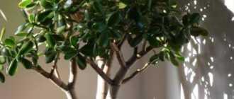 5 растений, которые вырастут даже из самого маленького черенка