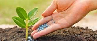 Домашние УДОБРЕНИЯ для комнатных растений: ТОП-20 средств