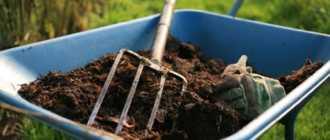 10 правил приготовления качественного компоста