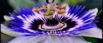 16 самых красивых цветков в мире: фото, описание, видео