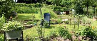 8 частых ошибок в дизайне садовых участков
