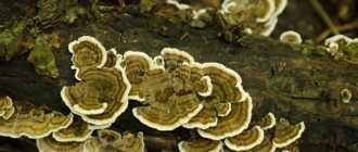 30 самых удивительных и красивых грибов — фото и интересные факты