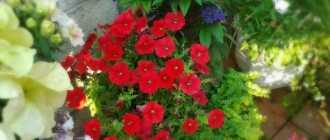 Cделать миниатюрный комнатный садик, подвесную корзину в квартире, цветную композицию; выбрать растения